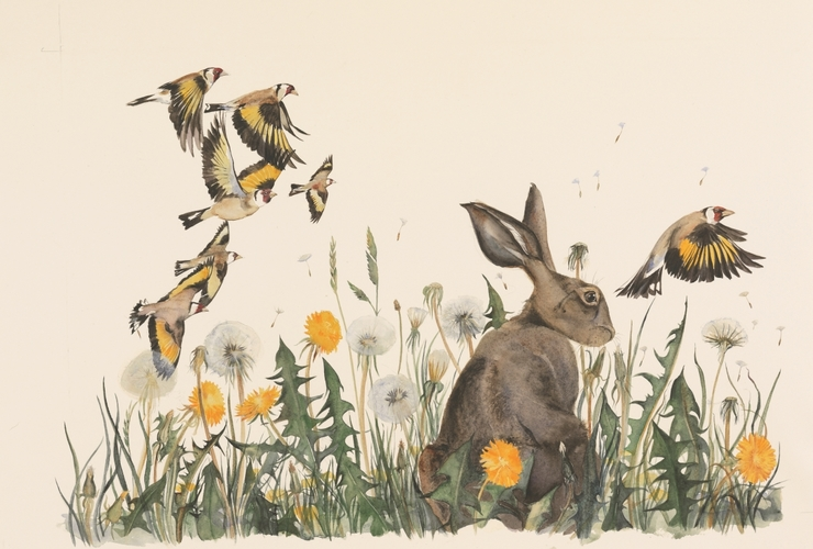 Dandelion and Hare