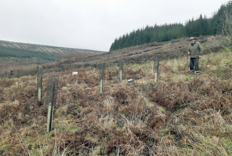 Plant a Tree at Glenlude - Peter Coutts
