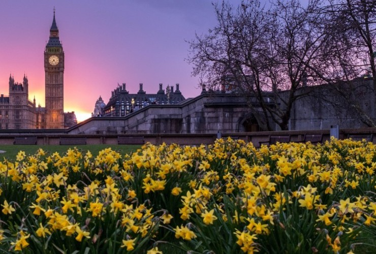 Big Ben and Flowers_London